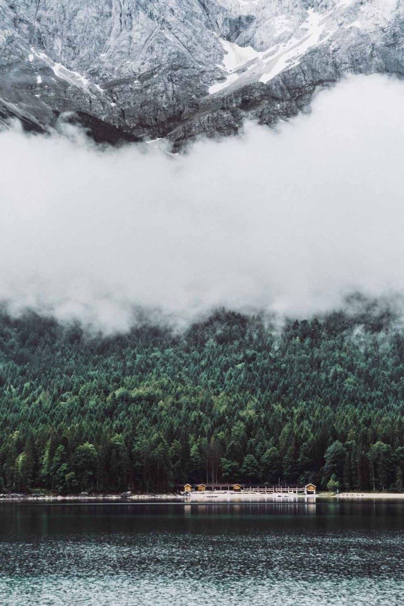 Wald und Fels im Detail