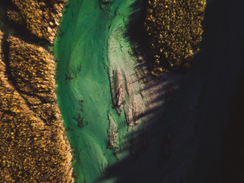 Die Flussarme der Isar schlängeln sich durch den Wald. Ein umgestürzter und angeschwemmter Baum liegt in Mitten des Flussbetts.