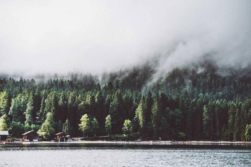 Das Ufer des Eibsees und der wolkenverhangene Wald dahinter.