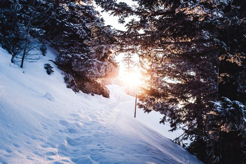 Der verschneite Weg unterhalb des Gipfels bot nochmals klasse Motive. Die tiefstehende Sonne sorgte für ein weiches Licht.