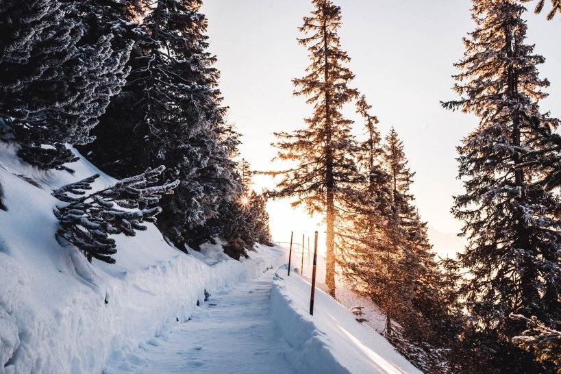 Der Weg unterhalb des Fahrenbergkopfs war zum Teil geräumt. Das Gegenlicht der Sonne und der von den Bäumen rieselnde Schnee ergaben ein herrliches Motiv.