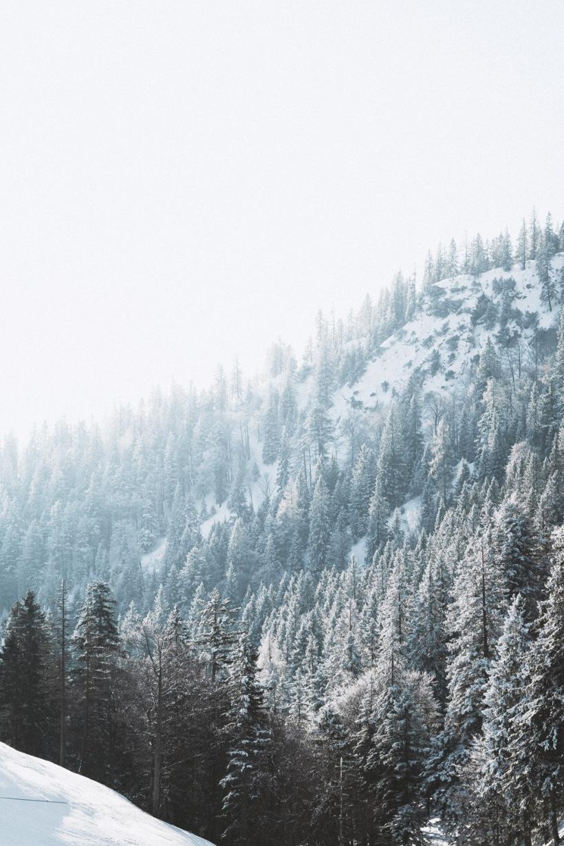 Die gefroren Bäumen ergeben im Gegenlicht ein surrendes Bild.