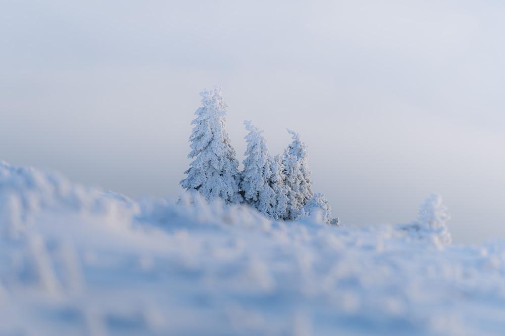 Die Bäume am Brockengipfel waren mit einer dicken Schneedecke überzogen.