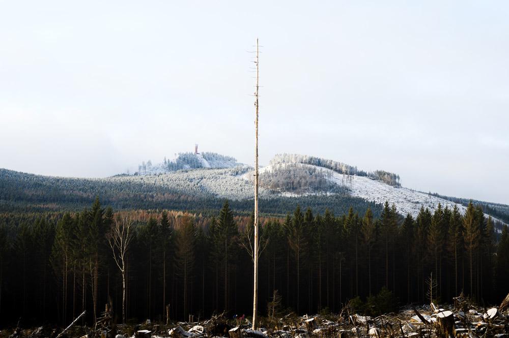 Waldsterben auf dem Weg zur Bahnstrecke der Schmalspurbahn.