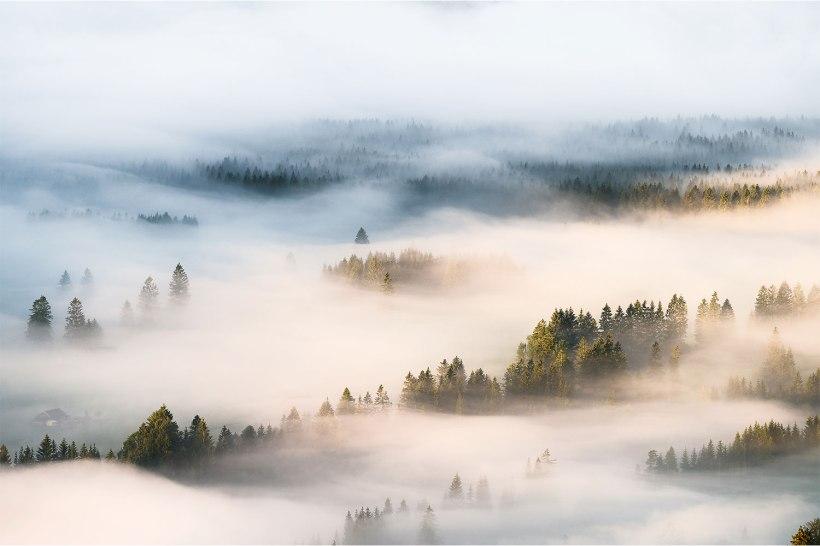 nebel zieht durch die wälder